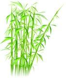 De vector van het bamboe Royalty-vrije Stock Afbeelding