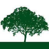 de vector van het boomsilhouet Stock Foto
