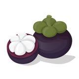 De vector van het mangostanfruit Stock Afbeeldingen