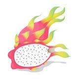 De Vector van het Pitayafruit Royalty-vrije Stock Fotografie