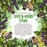 De vector van schetskruiden en kruiden affiche van de landbouwbedrijfopslag Royalty-vrije Stock Afbeelding