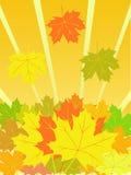 De vectorachtergrond van de herfst Royalty-vrije Stock Foto