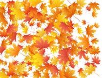 De vectorachtergrond van esdoornbladeren, de herfstgebladerte op wit grafisch ontwerp royalty-vrije stock afbeeldingen