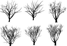 De vectorbomen van de inzameling Stock Fotografie