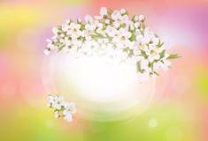 De vectorboom van de kader tot bloei komende kers Royalty-vrije Stock Afbeelding