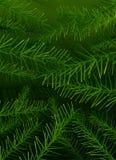 De vectorboompijnboom vertakt zich achtergrond Royalty-vrije Stock Foto