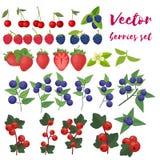 De Vectorillustratie van de bessenreeks Aardbei, Blackberry, Bosbes, Kers, Framboos, Rode aalbes Bessen en hun royalty-vrije illustratie