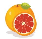 De vectorillustratie van de grapefruit Stock Afbeelding