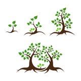 De vectorillustratie van de stamboom Stock Afbeeldingen