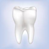 De Vectorillustratie van de tand. Geïsoleerdr. royalty-vrije illustratie