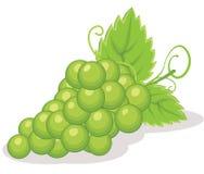 De vectorillustratie van druiven royalty-vrije illustratie