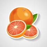 De vectorillustratie van de grapefruitsticker Beeldverhaalsticker met witte contour in strippaginastijl stock illustratie