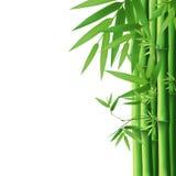 De vectorillustratie van het bamboe Stock Afbeeldingen