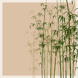 De vectorillustratie van het bamboe. Stock Foto