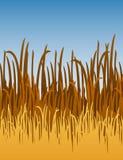 De VectorIllustratie van het Gras van de wildernis Royalty-vrije Stock Foto's