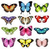 De vectorillustraties van de kleurenvlinder Royalty-vrije Stock Afbeeldingen