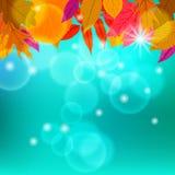 De vectorkaart met de herfstdecor en doorbladert Stock Foto