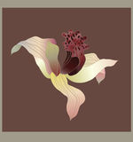 De vectorkaart van de orchidee Stock Foto