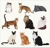 De vectorrassenkatten in verschillend stelt Beeldverhaal hoogst gedetailleerd huisdieren Stock Foto's