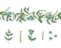De vectorreeks het ontwerpelementen van de tuininstallatie en het patroon borstelen met gestileerd vergeet-mij-nietje, basilicum, royalty-vrije illustratie
