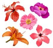 De vectorreeks van bloemen Stock Afbeelding