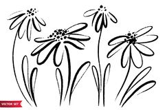 De vectorreeks van inkt die wilde bloemen, zwart-wit artistieke botanische illustratie trekken, isoleerde bloemenelementen, getro Royalty-vrije Stock Fotografie