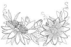 De vectorslinger met overzichts tropische Passiebloem of Hartstocht bloeit, knop, bladeren en rank die op witte achtergrond wordt vector illustratie