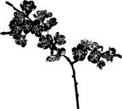 De vectortak van de kersenbloesem Royalty-vrije Stock Foto's