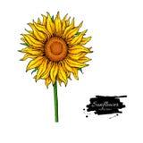 De vectortekening van de zonnebloembloem Hand getrokken die illustratie op witte achtergrond wordt geïsoleerd royalty-vrije illustratie