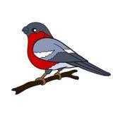 De vectorvogel van de tekeningsgoudvink Stock Foto