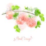 De vectorwaterverf bloeit Hydrangea hortensia Stock Foto's