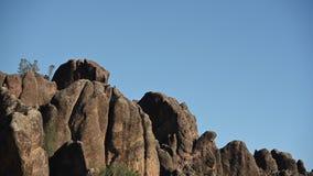 De veelvoudige Condors van Californië op de Rotsen van Toppen stock videobeelden