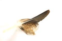 De veer van de adelaar stock afbeelding