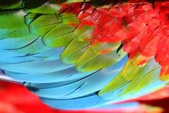 De veer van de papegaai Royalty-vrije Stock Afbeeldingen