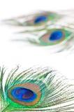 De veer van de pauw op wit Stock Afbeeldingen