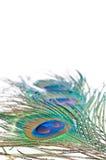 De veer van de pauw op wit Royalty-vrije Stock Fotografie