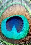 De Veer van de pauw sluit omhoog gedetailleerd Het oog van de pauwveer stock foto's