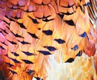 De veerachtergrond van de fazant Royalty-vrije Stock Afbeeldingen