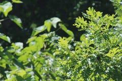 De vegetatie gaat groen weg stock foto