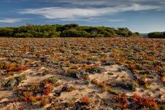 De vegetatie van de Kust van Portugal Stock Fotografie