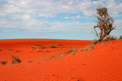 De vegetatie van de woestijn Stock Afbeeldingen
