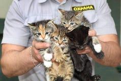 De veiligheidsagent gevonden kleine katjes Royalty-vrije Stock Foto
