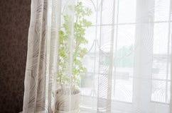 De vensterbankwinter Stock Foto