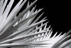 De Ventilator van de palm Stock Afbeeldingen