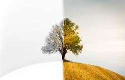 De verandering tussen seizoenen Een eenzame boom die zowel de winter, s is royalty-vrije stock fotografie