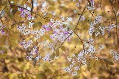 De verandering van de bladkleur en bloeiende bloemen Stock Foto