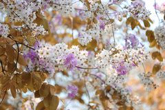 De verandering van de bladkleur en bloeiende bloemen Stock Fotografie