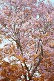 De verandering van de bladkleur en bloeiende bloemen Stock Afbeelding