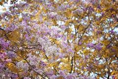 De verandering van de bladkleur en bloeiende bloemen Royalty-vrije Stock Fotografie