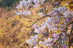 De verandering van de bladkleur en bloeiende bloemen Royalty-vrije Stock Afbeeldingen